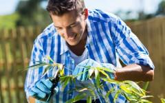 Pruning tips